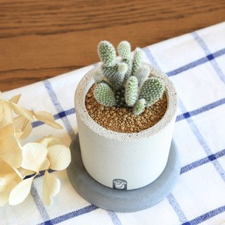 A well succulent cactus cement hand made potted plant containing cactus / white-haired palm