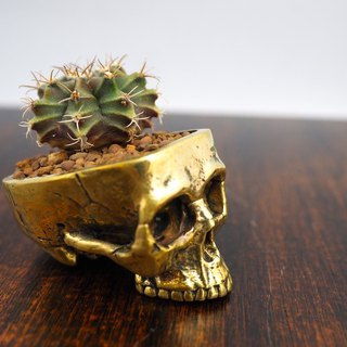 Skull pots cactus small potted plants in brass gold color  Handcrafted from