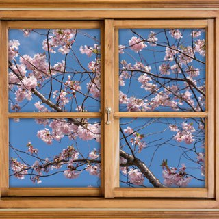 photography/ open a window with plants/ under sakura(cherry tree)
