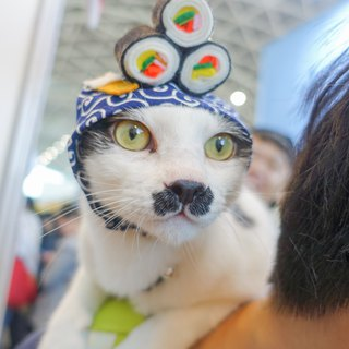 Japanese sushi pet cat dog hat headdress * S number