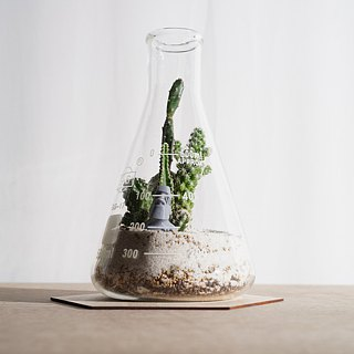 Bottle micro landscape -500ml conical beaker (fleshy cactus)