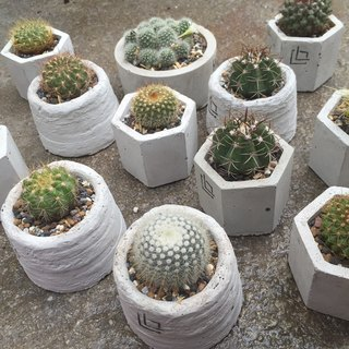 Small hexagonal - cactus Potted cement pot random cacti exchange gifts