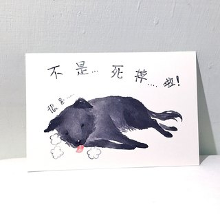 Dogs Things: Long-haired dogs / double postcards postcard