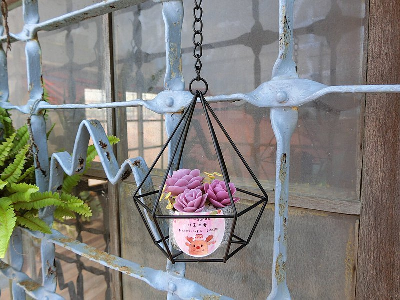 Geometry Pot-Purple Mountain Rose Everlasting Succulent/Hanging Potted Plant