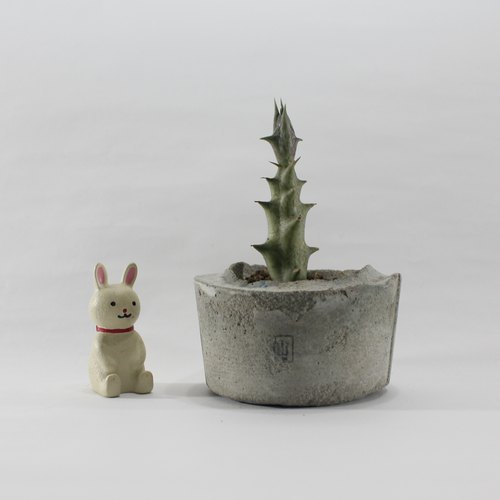 Small potted succulents - Angtou, I am me