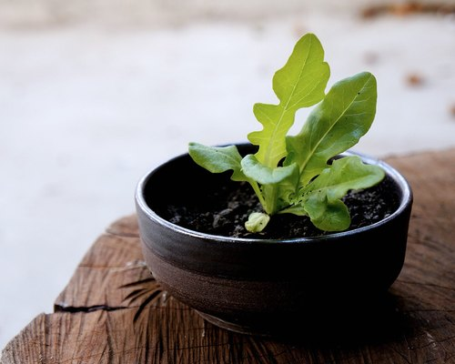 No.12 edible vegetables ceramic planting pot