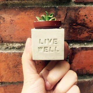 Live Well (live wonderful) ~! Magnet potted succulents