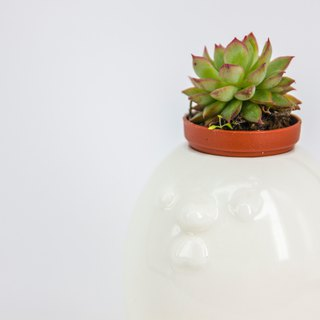 Succulents, urban healing series - Want chicken