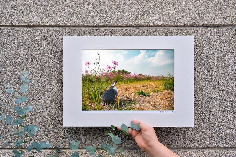 Limited rabbit photography art original - double butterfly whisper