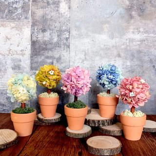 Spring day | Hydrangea small flowers tree. Mini pots. Eternal plantlets