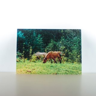 Photographic Postcard: Horses, Lofthus, Hordaland, Norge