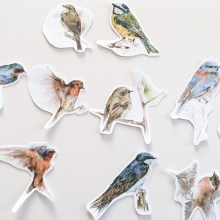 Bird sticker group A