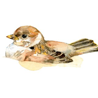 Watercolor decorative painting sparrow - 0007