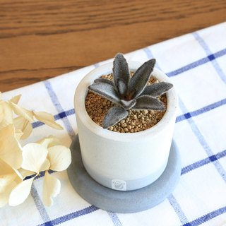 A well special edition succulent plant cactus cement hand-made potted plants containing plants / black rabbit ears / chocolate rabbit ears