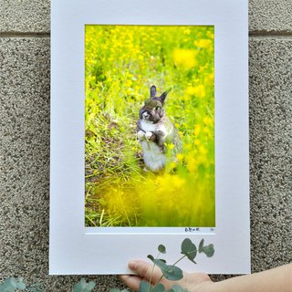 Limited rabbit photography art original - hope