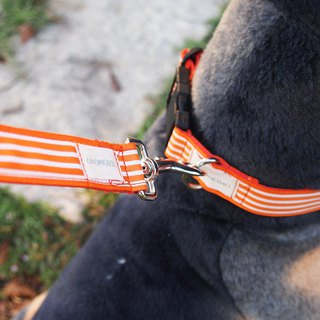 Orange Stripe Outlet Collar Leash Dog