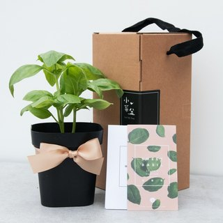 Sweet Basil _ Vanilla Pot Gifts
