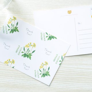 Garden Collection-Primula Kewensis postcard / buy 3 get 1
