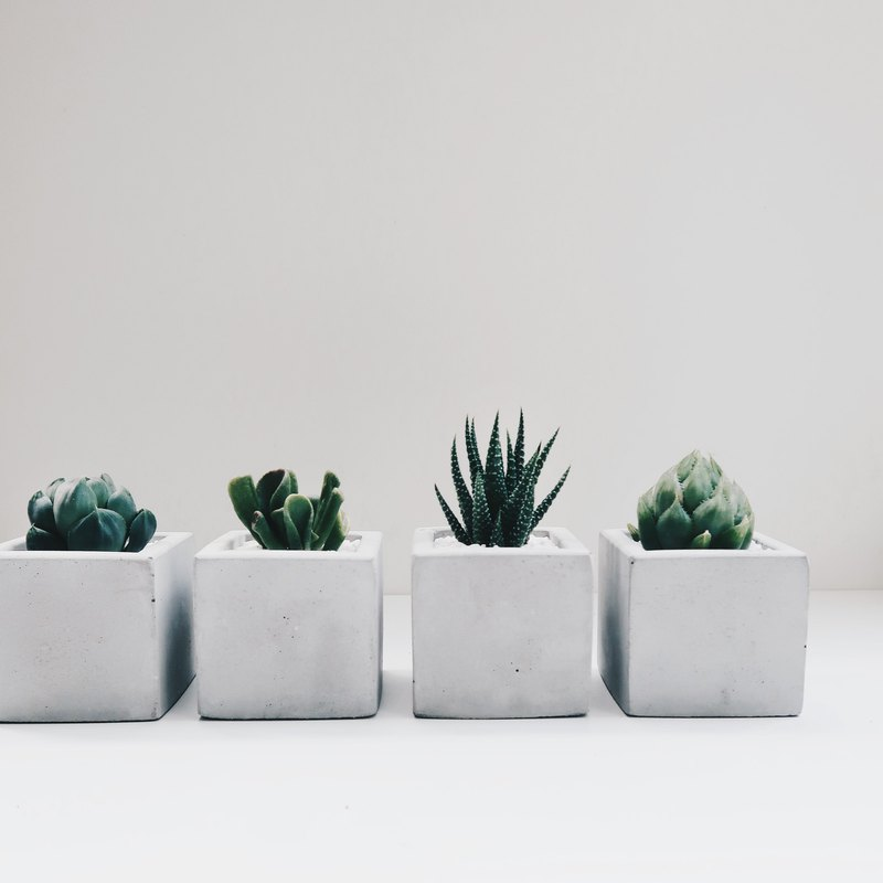SINGLE HOUSE 單身公寓│極簡方形多肉/仙人掌水泥盆栽 (含植物)