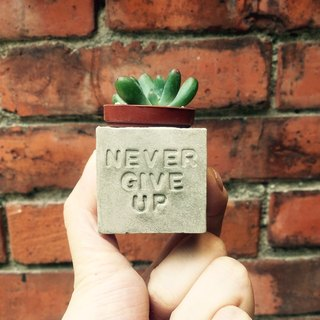 Never give up and never give up ~ magnet potted succulents