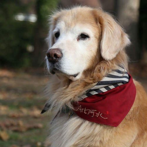 Dogs exclusive name scarf - Custom (large dogs) - khaki stripes