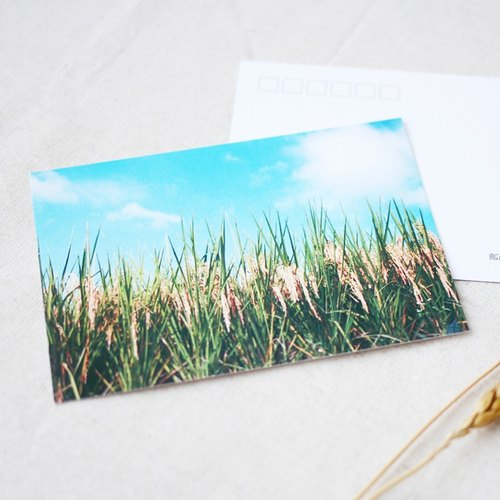 "Tour Tu | Travel Photography Postcard ""Paddy"" original scenery and fresh Fujian Knot postcard collection"