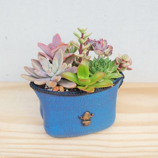 Peas succulents and small groceries - Poli cute bag series planting group