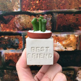 Best friend Meaty magnet potted plants