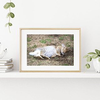 Limited Rabbit Photo Art Original - Sweet Dreams