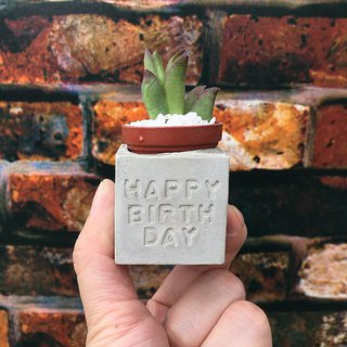 Happy birthday Happy birthday. Meaty magnet potted plants