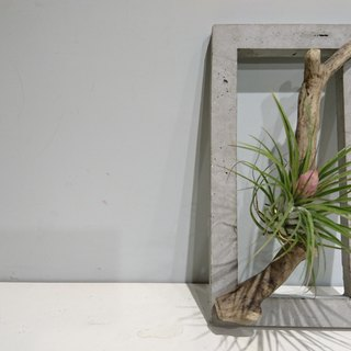 Cement box (with drift wood and air pineapple is about to flow !! to buy fast)