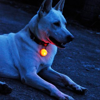 Wang Ling's Night Light Shining Charm Light Dog Bell Light Charm Lights Luminous Bells LED Lights