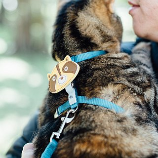 [Tail with me] classic nylon cat series chest strap blue water