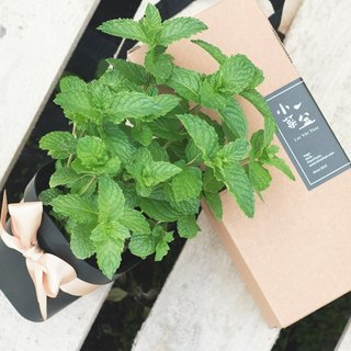 Nedland green mint - vanilla potted gift