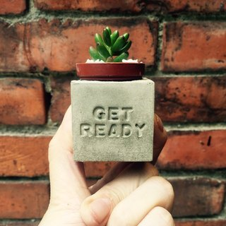 Get ready - I'm ready! Magnets potted succulents