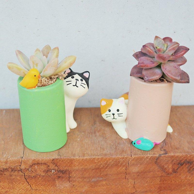 荳荳多肉植物與小雜貨-玩耍貓咪多肉植栽組合