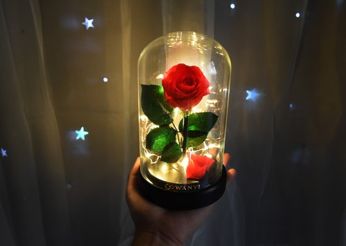 WANYI beauty and the beast eternal glass cover rose (small star warm light) without the flower dry flower Tanabata