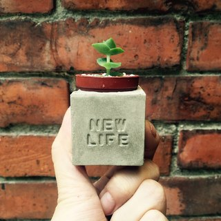 New life - new life new beginning magnet potted succulents