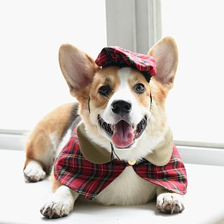 Handmade Tartan Pet Beret & British Cape-Fashion Outfit- Dog/Cat/Bunny【ZAZAZOO】