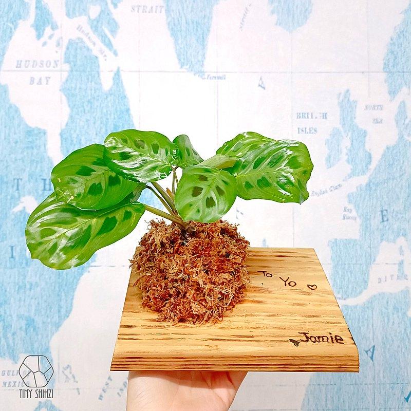 植木座・台南・植物上板・熱雕刻體驗・高質感生日禮物