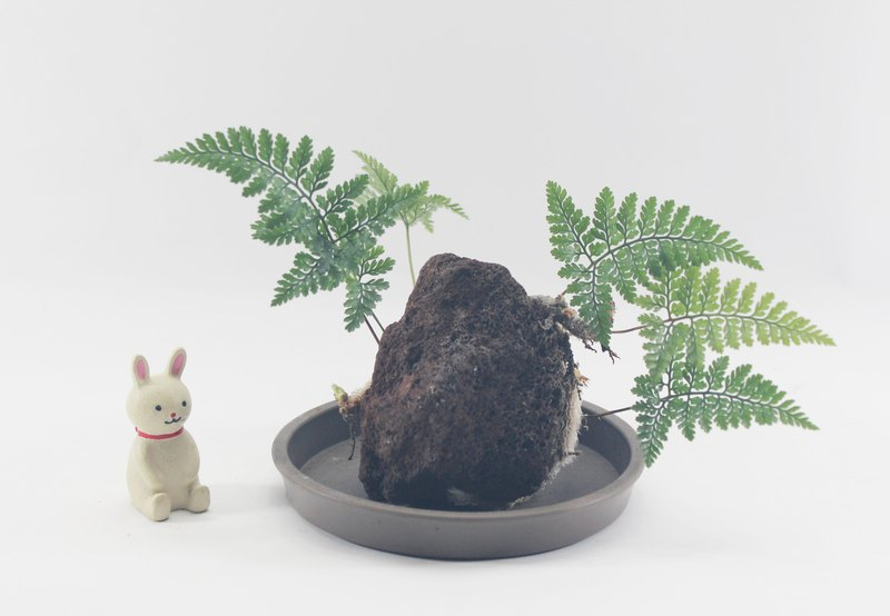 Ferns potted - take root, bravely fight