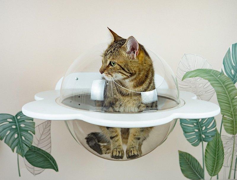 木製白花形狀的貓架子與丙烯酸玻璃