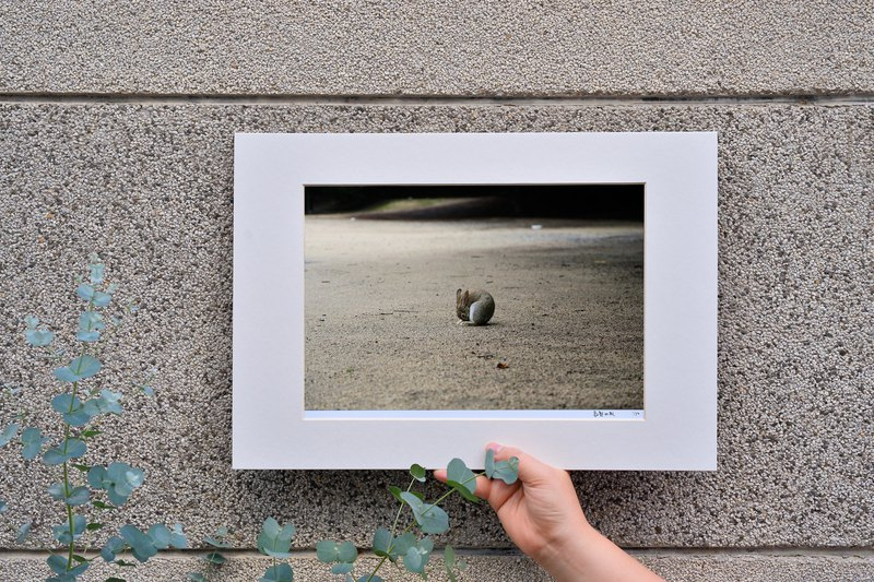 Limited Rabbit Photo Art Original - Round
