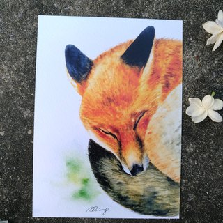 Sleeping Fox Postcard (Print)
