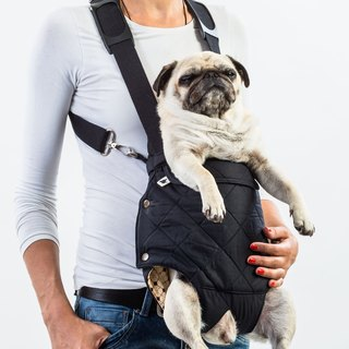 Dog front carrier CLYDE