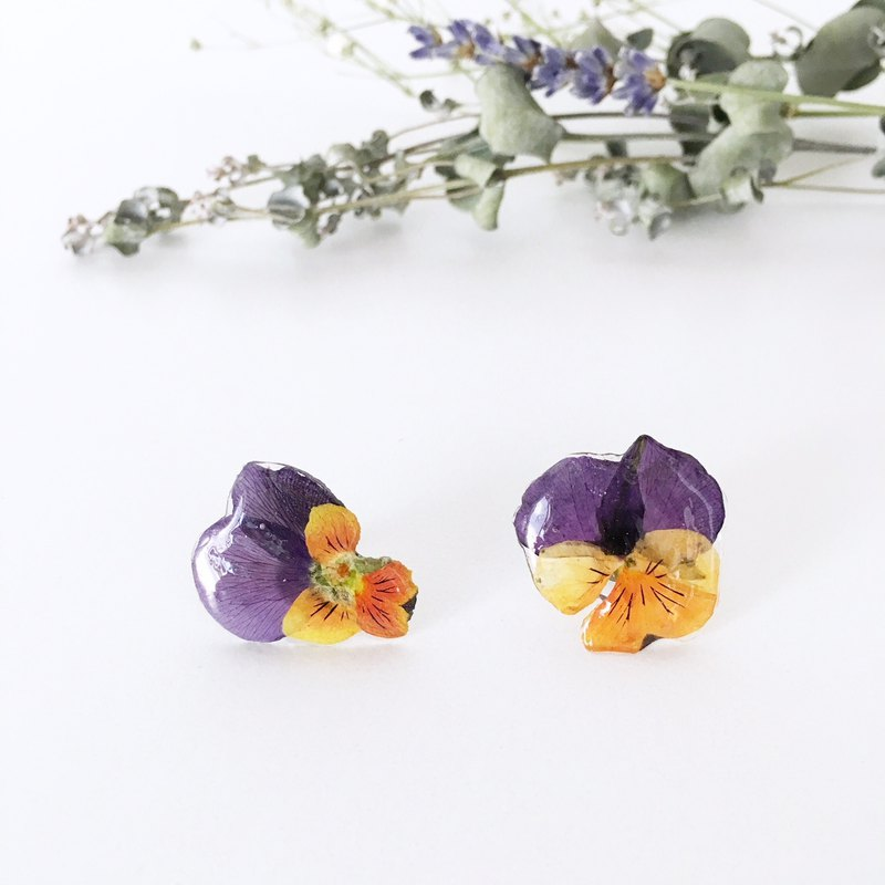 Purple and Orange color of Viola Stud pierces