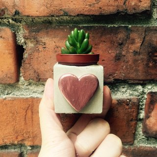 Rose gold love heart! Multi meat magnet potted plant