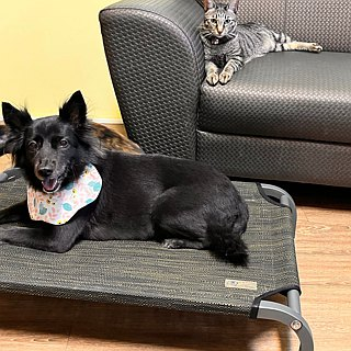 M-Little Prince's Flying Bed - Autumn Brown Length 90X Wide 60X Height 15CM