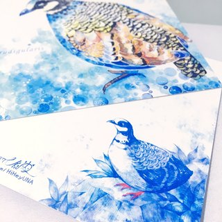 Taiwan bird mountain bamboo / double postcards postcard