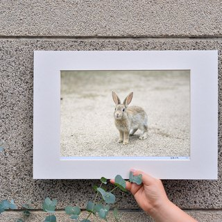 Limited rabbit photography art original - Meng